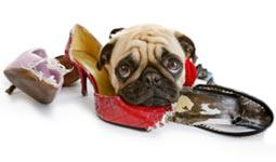behaviour-problem-solving-dog-obedience-training-vic-dog