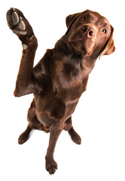 complex-skills-and-tricks-dog-obedience-training