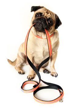 dog-obedience-training-vic-dog
