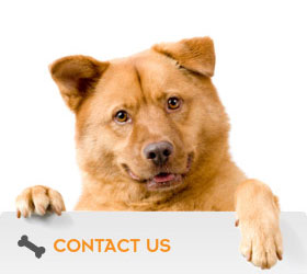 vic-dog-dog-training-behaviour-specialists-home-one