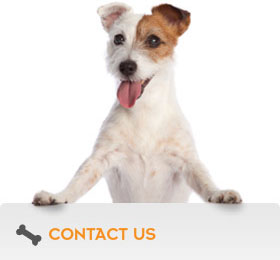 vic-dog-dog-training-behaviour-specialists-home-two